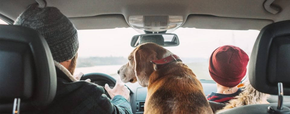image How to Drive Safely With Toddlers and Pets
